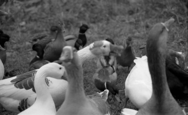 30 Banner Elk Birds