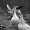 16 Banner Elk Birds