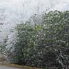 12-4-2009 Beech Mountain and Grandfather Mountain 008
