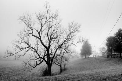 Yadkin Fog