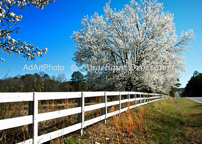 Spring on Farrington Mill Road, Early March, NC