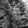 CPCC Plants