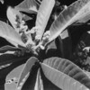 Plants at CPCC