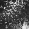 15 lil flowers
