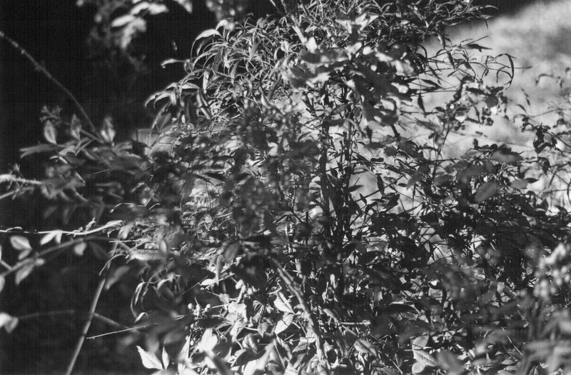 18 Leaves