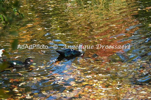 Gliding into Fall, Sarah P. Duke Gardens, Durham, NC