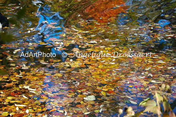 Reflections: Duke Gardens NC