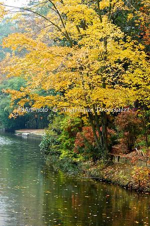 Autumn in the Sarah P. Duke Gardens, Durham NC