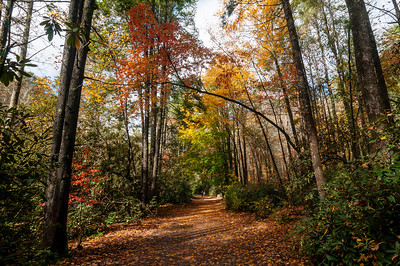 DuPont State Forest in Cedar Mountain, North Carolina