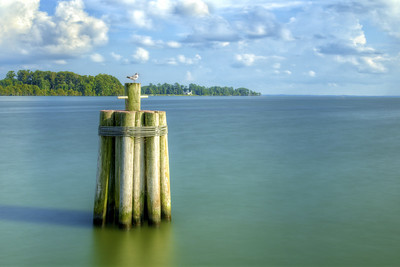A seagull perched on some wooden pilings in Edenton, NC on Thursday, August 20, 2015. Copyright 2015 Jason Barnette