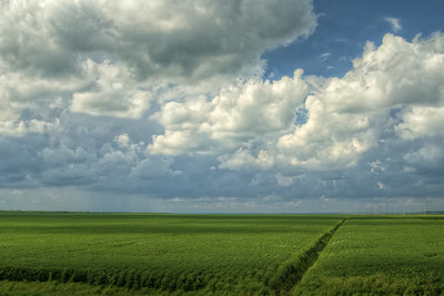 Dramatic clouds linger over deep green farmlands in Elizabeth City, NC on Thursday, August 20, 2015. Copyright 2015 Jason Barnette