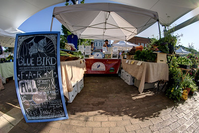 The Blue Bird Farm table set up at the Hickory Farmers' Market at the Sails on the Square in downtown Hickory, NC on Saturday, June 14, 2014. Copyright 2014 Jason Barnette