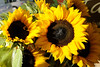Beautiful sunflowers from Tumbling Shoals Farm at the Hickory Farmers' Market at the Sails on the Square in downtown Hickory, NC on Saturday, June 14, 2014. Copyright 2014 Jason Barnette