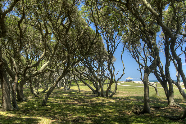 A view through a grove of coastal trees of a path and gazebo on the beach at the Fort Fisher State Recreation Area on the southern tip of Pleasure Island in Kure Beach, NC on Saturday, July 12, 2014. Copyright 2014 Jason Barnette