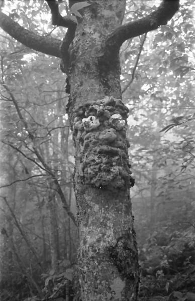 26 Talking Tree
