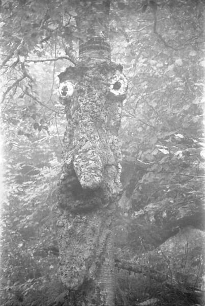 36 Tree Face
