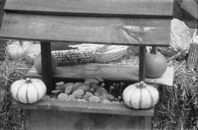 23 Pumpkins and Corn