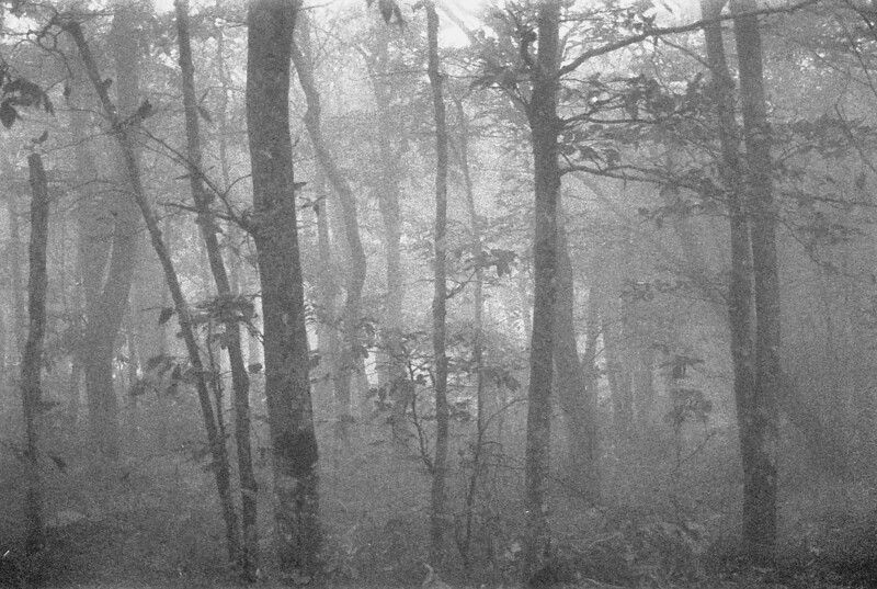 17 Fog and Trees