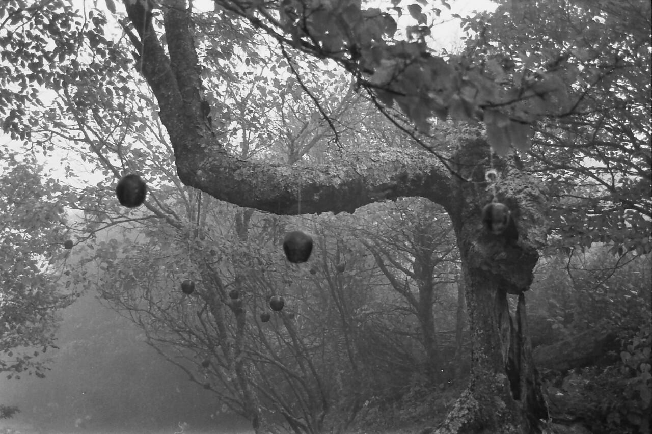 17 Talking Tree and its apples