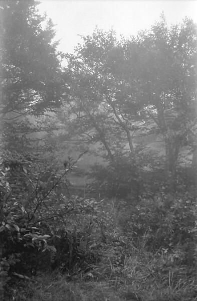 31 Foggy Trees
