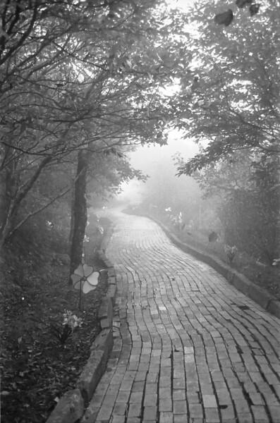 24 On the Foggy Yellow Brick Road