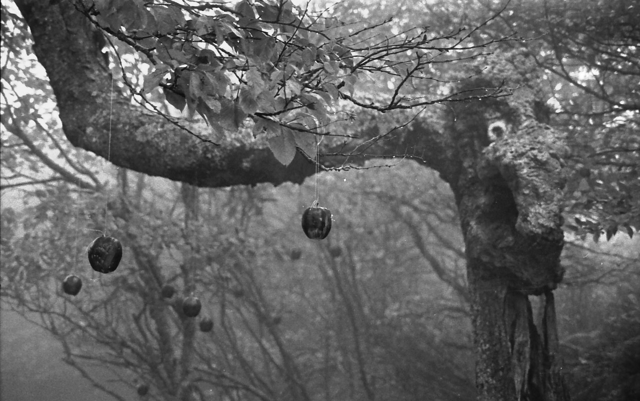 15 Talking Tree and Apples