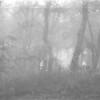 8 Fog