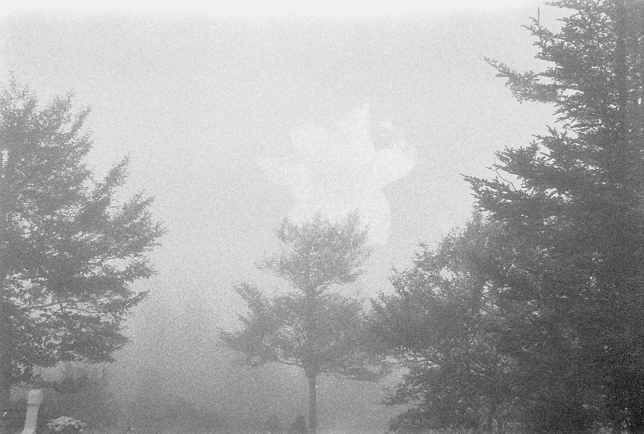 25 Fog and Trees