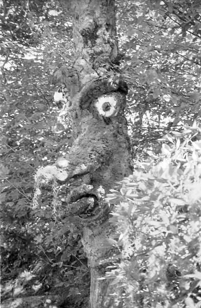 28 Land of Oz Talking Tree