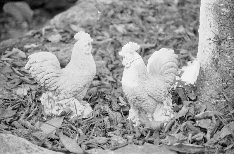 12 Fake Roosters