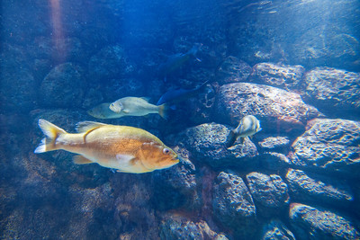 North Carolina Aquarium at Pine Knoll Shores in Pine Knoll Shore