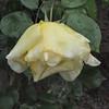 4-22-2012 Raffaldini Vineyards 066