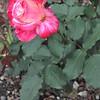 4-22-2012 Raffaldini Vineyards 105