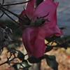 11-3-2012 Raffaldini Vineyard 094