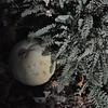11-3-2012 Raffaldini Vineyard 031