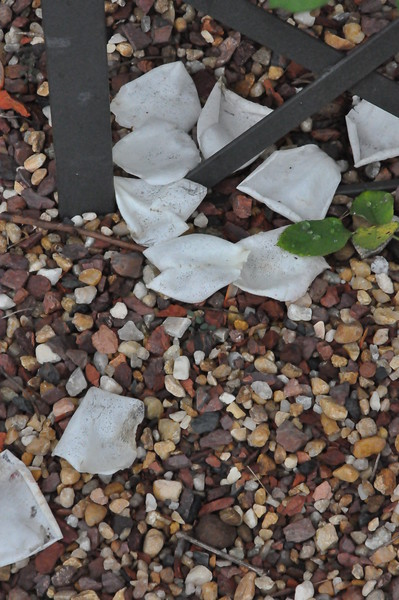 4-22-2012 Raffaldini Vineyards 087