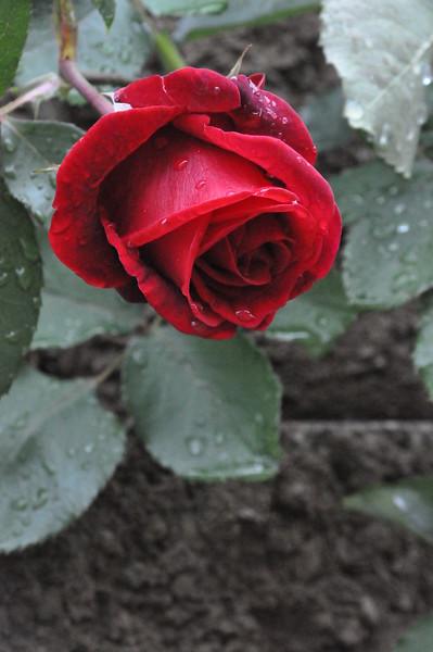 4-22-2012 Raffaldini Vineyards 079