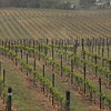 4-22-2012 Raffaldini Vineyards 003