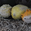 11-3-2012 Raffaldini Vineyard 090