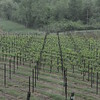 4-22-2012 Raffaldini Vineyards 019