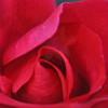 11-3-2012 Raffaldini Vineyard 069