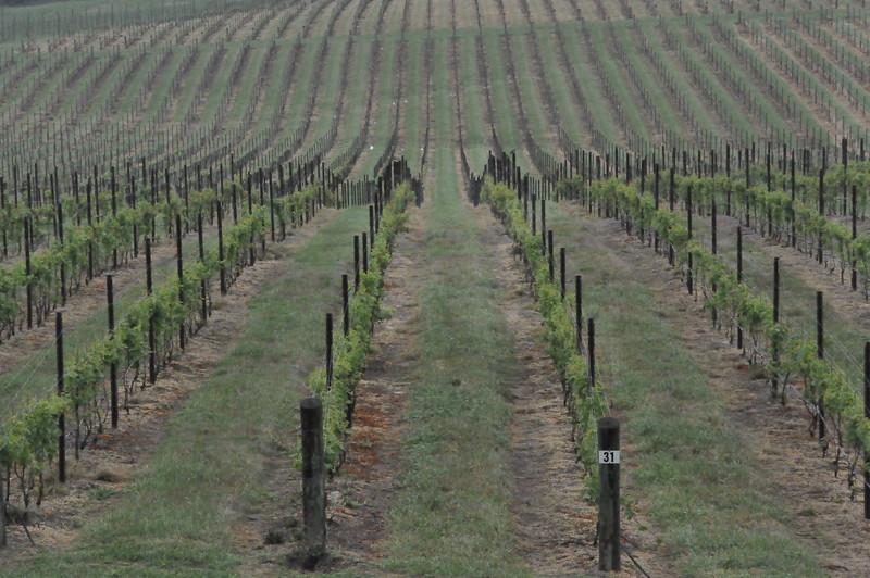 4-22-2012 Raffaldini Vineyards 022