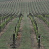 4-22-2012 Raffaldini Vineyards 022