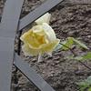 4-22-2012 Raffaldini Vineyards 074