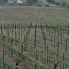4-22-2012 Raffaldini Vineyards 020