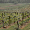4-22-2012 Raffaldini Vineyards 002