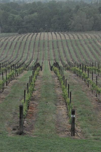 4-22-2012 Raffaldini Vineyards 021