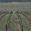 4-22-2012 Raffaldini Vineyards 021