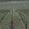 4-22-2012 Raffaldini Vineyards 011