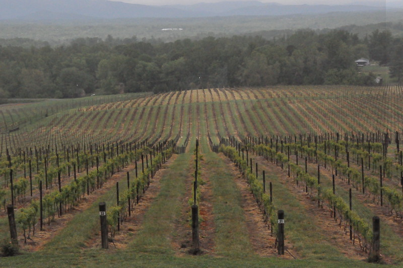 4-22-2012 Raffaldini Vineyards 001